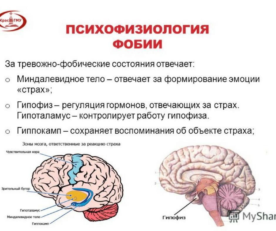 тревожность и страх психофизиология