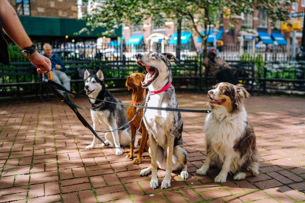 услуги для домашних животных выгул собак