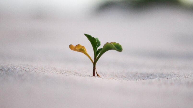 с чего начать личностный рост